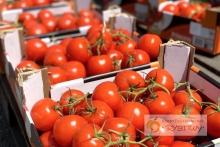 05_pomidory-na-placu__960px