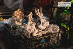 003-Kompleks-Handlowy-Rybitwy-warzywa-owoce-krakow-DSC_9712
