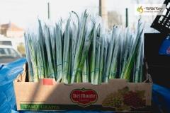 005-Kompleks-Handlowy-Rybitwy-warzywa-owoce-krakow-DSC_9715