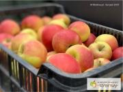 jabłka2