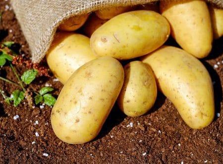 Sprzedaż ziemniaków – ważny komunikat