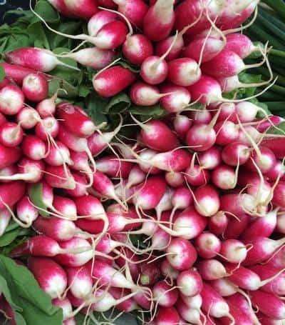 rzodkiew jako przedstawiciel czerwonych warzyw