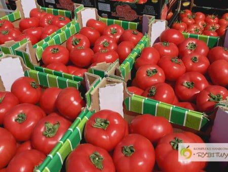 Polskie pomidory na KH Rybitwy