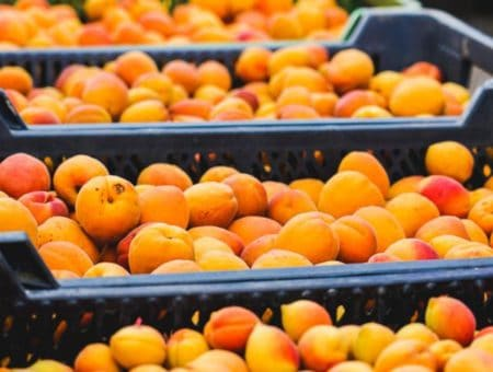 Sezon owocowo-warzywny w pełni