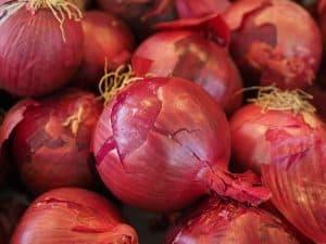 cebula czerwona - aromatyczna i smaczna