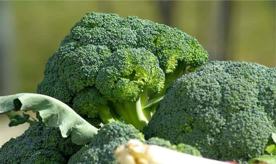Brokuły - ważny składnik diety