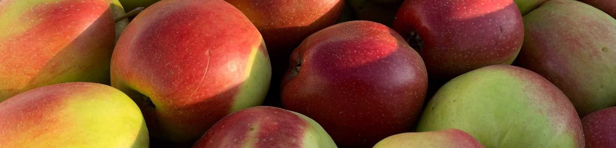 Jabłka pasek