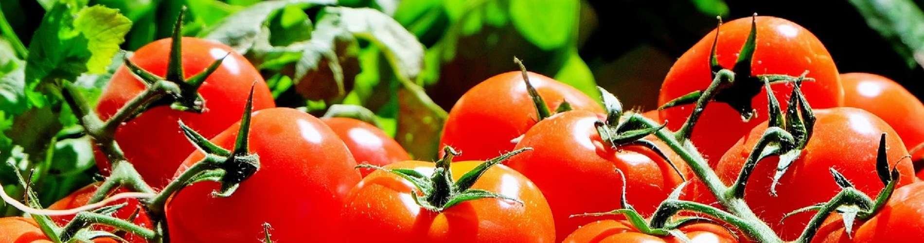 Pomidory pasek